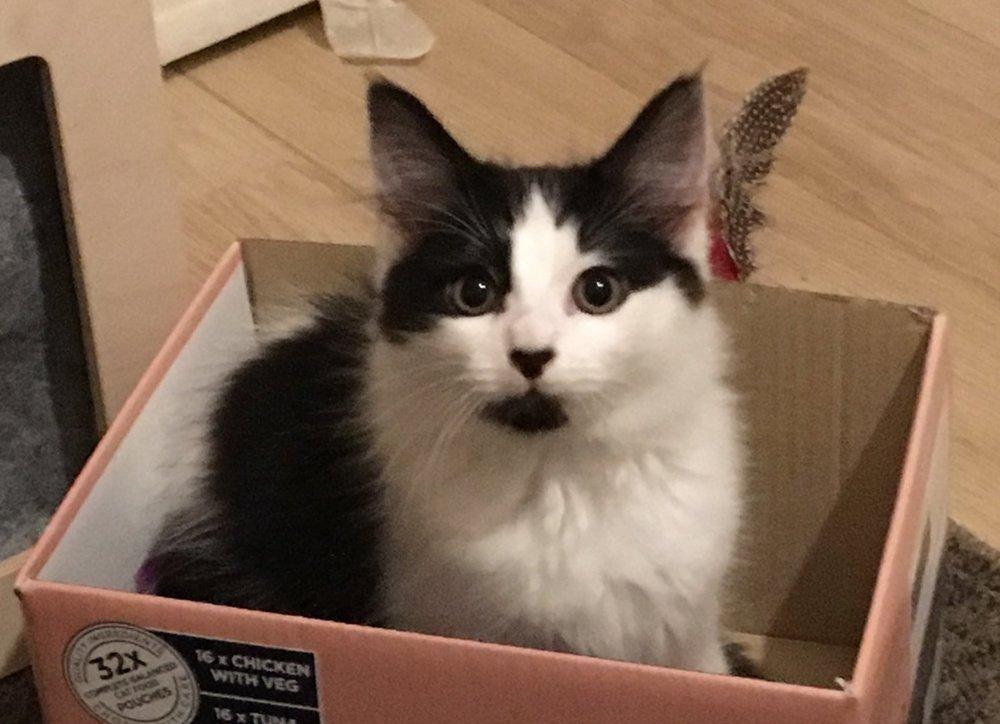 Chico like any self respecting cat/kitten loves a box!!