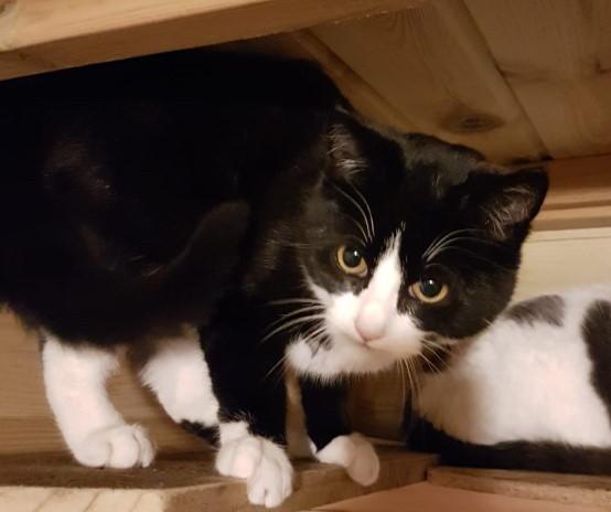 Misty feeling safe on the top shelf in the pen…