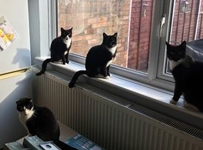 Black and white cats for rehoming.jpg