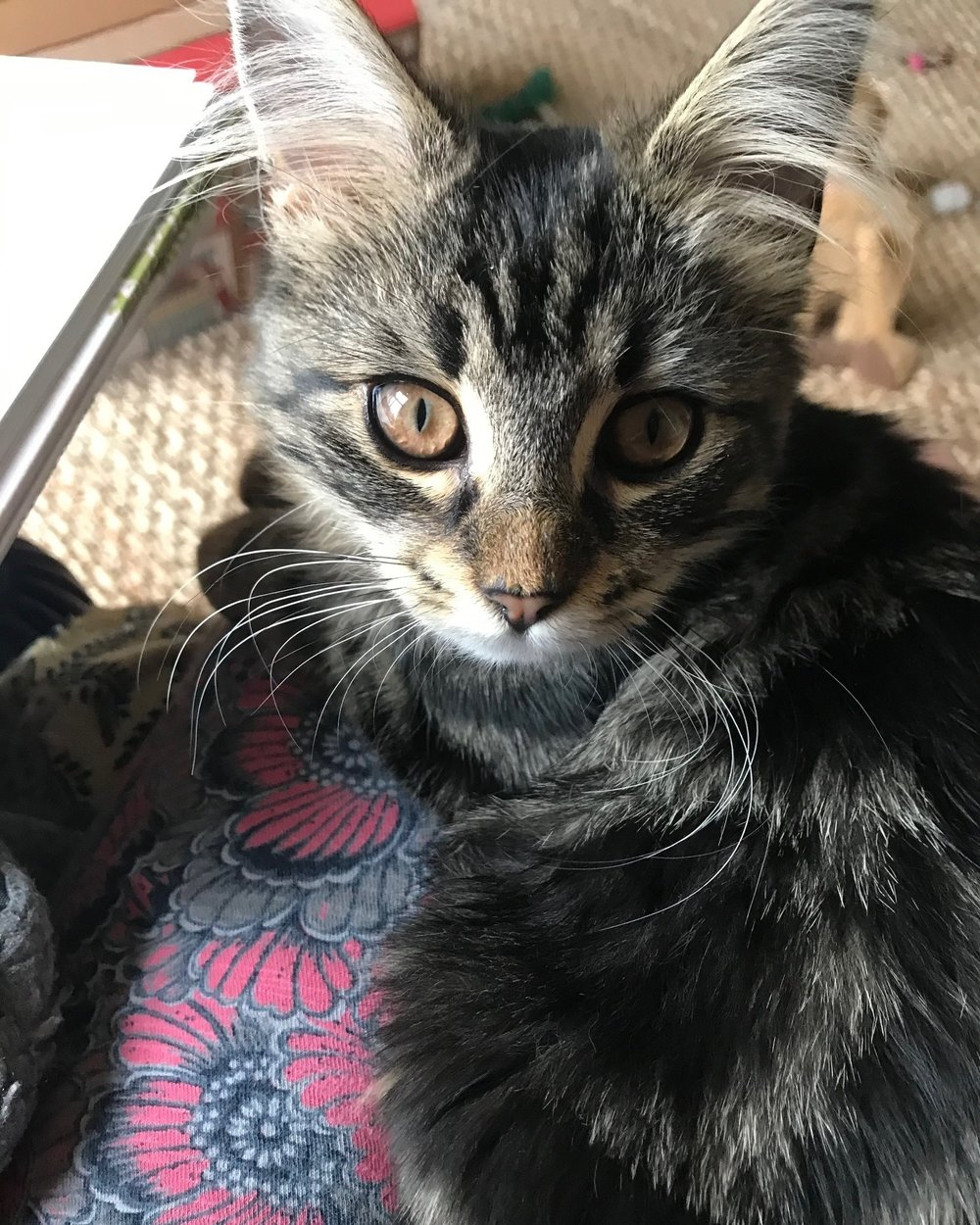 Kitty+4.jpg