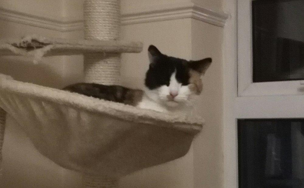 missy in hammock.jpg