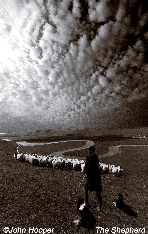 sheep1x.png
