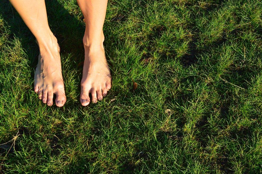 grassy.jpg
