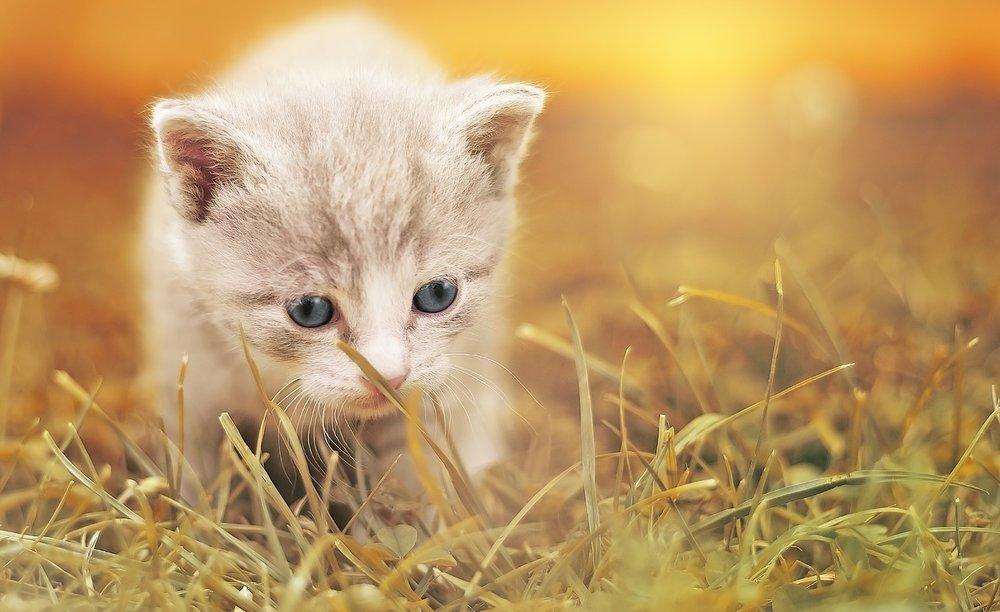 cat-1992140_1280.jpg