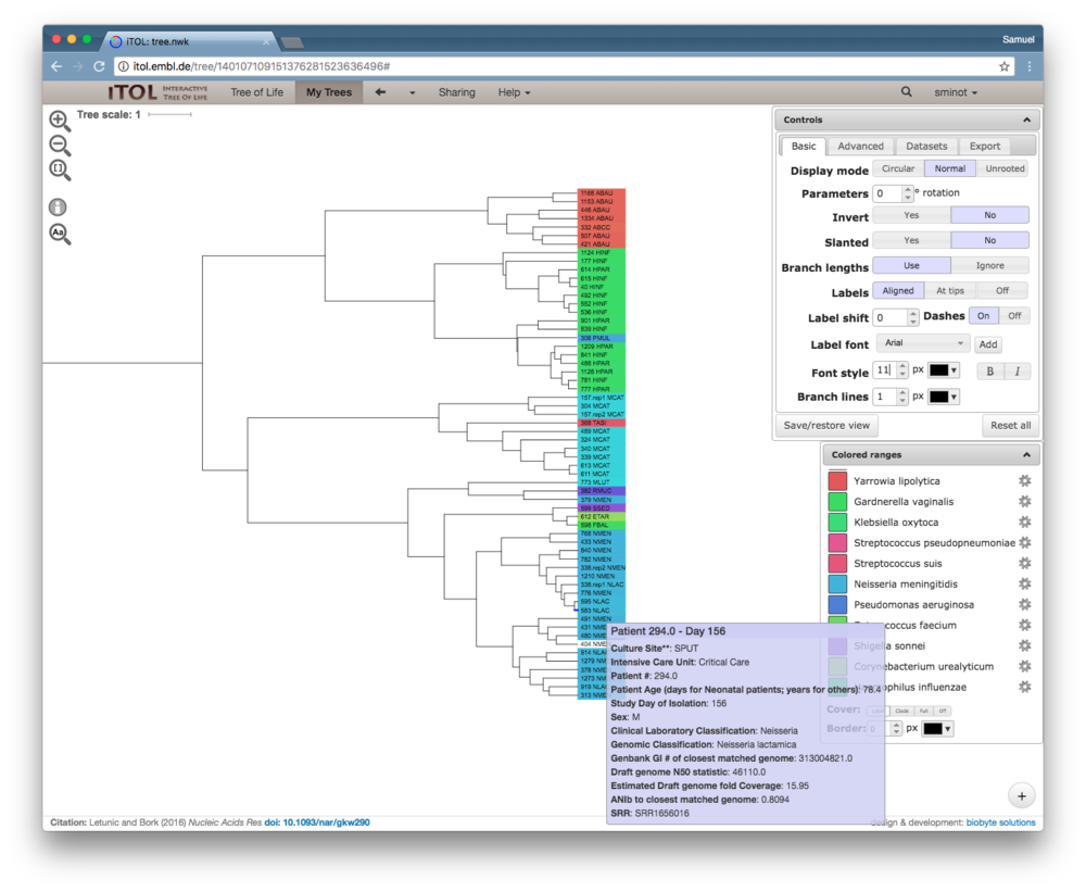 Zoomed-in view of a clade including  Acinetobacter  (red),  Haemophillus  (green),  Moraxella  (teal), and  Neisseria  (blue). The rollover text shows metadata for sample 583, which was sampled from the same patient as its closest neighbor in the tree, sample 595.