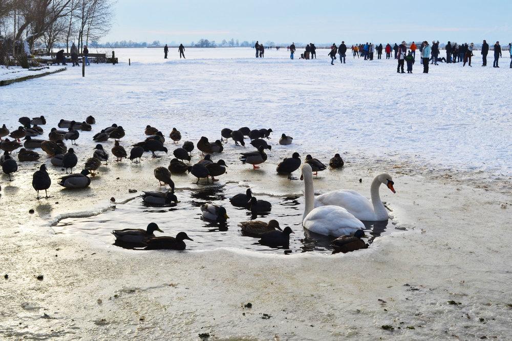 urbanbacklog-amsterdam-frozen-water-2.jpg