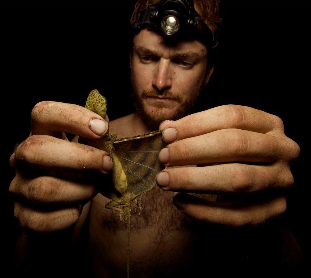 Draco_lizard_Borneo2014.jpg