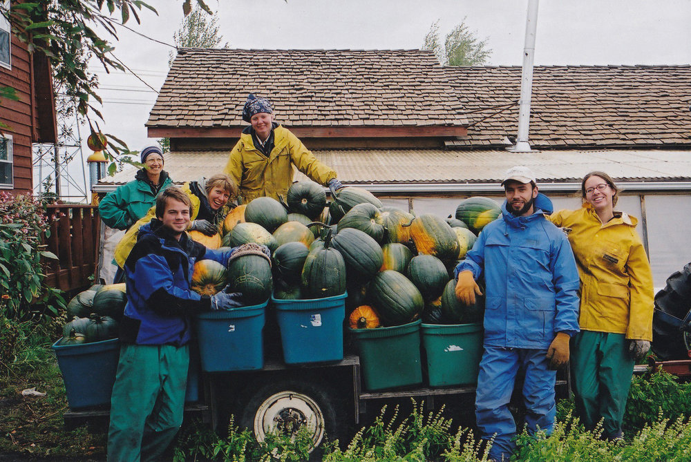 Harvesting pumpkinsat Vriend Organic farm; can you spot James?
