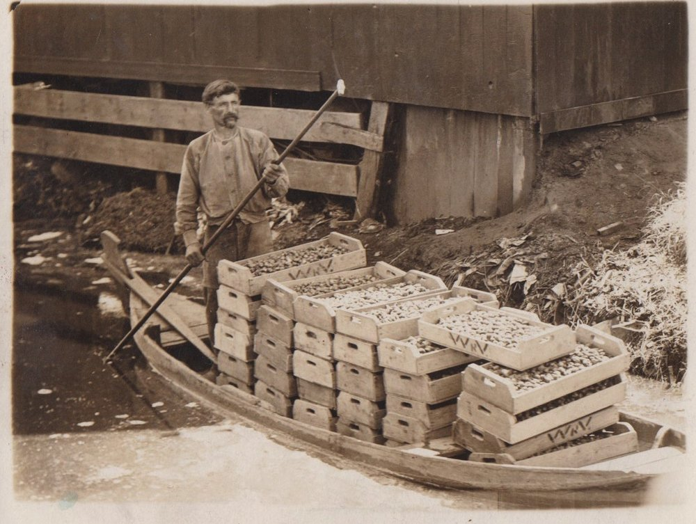 Wooden crates are an important part of the production at Sundog; their use extends back to early family farming practices in the Netherlands, where they were used especially for tulip and potato production.