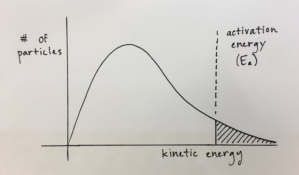 My highly scientific, well-researched, hand-drawn graph showing the bell curve of molecular energies in a sample