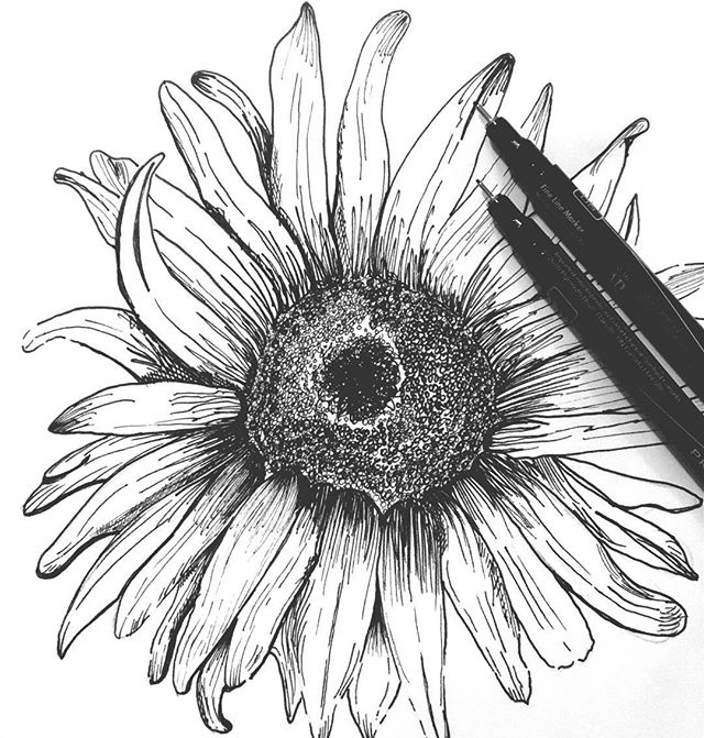 What's your favorite flower??? Cheers to learning new skills. This little guy took me forever but I'm stoked to learn how to draw more beautiful pieces like this for my logo clients. . . . . #graphicdesigner #laptoplifestyle #bossbabe #pretty #flowers #sunflowers #drawing #sketching #art #logodesigner #denversmallbusiness #girlboss #entrepreneur #smallbusinessowner #smallbizowner #lovely