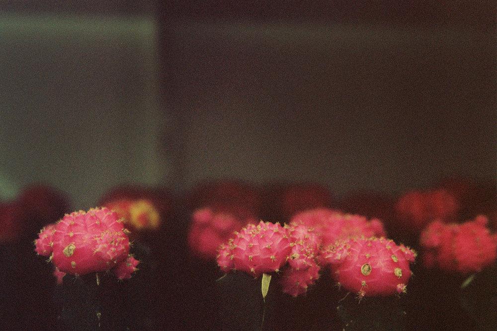 colorfilmmiami.jpg