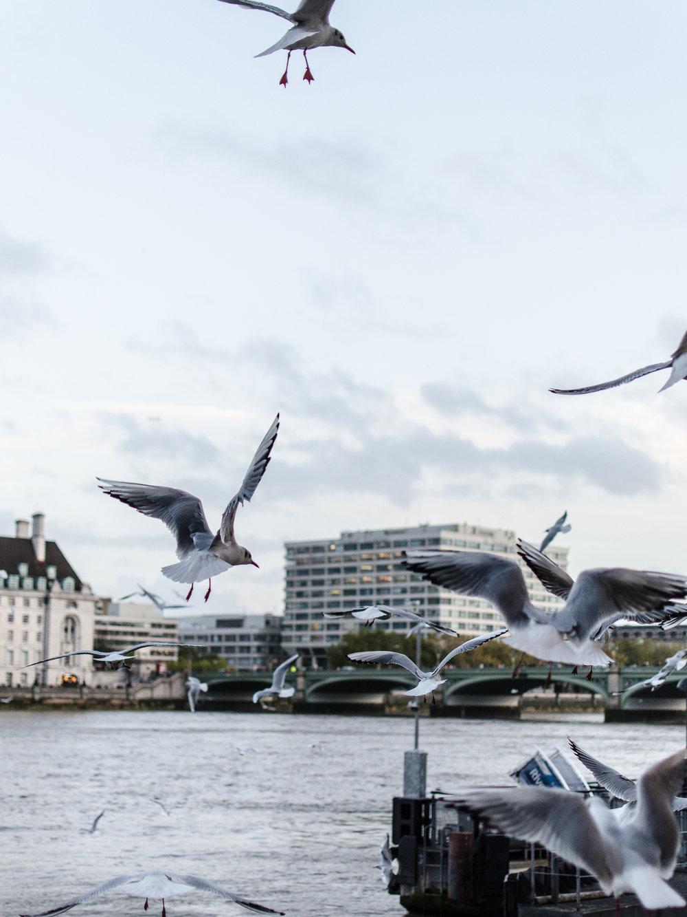 London-338.jpg