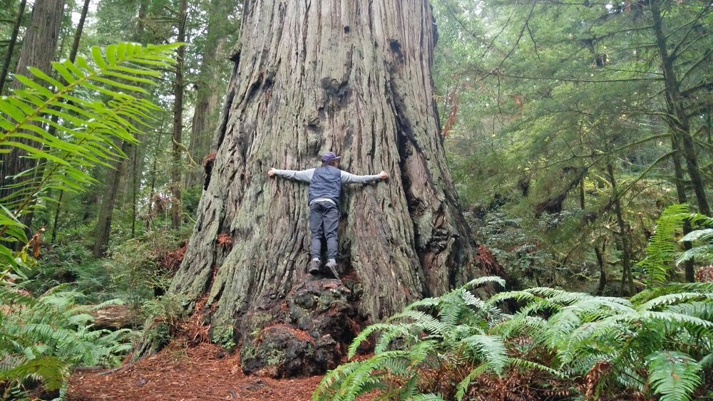 Nothing better for the soul as hugging a massive California Redwood!