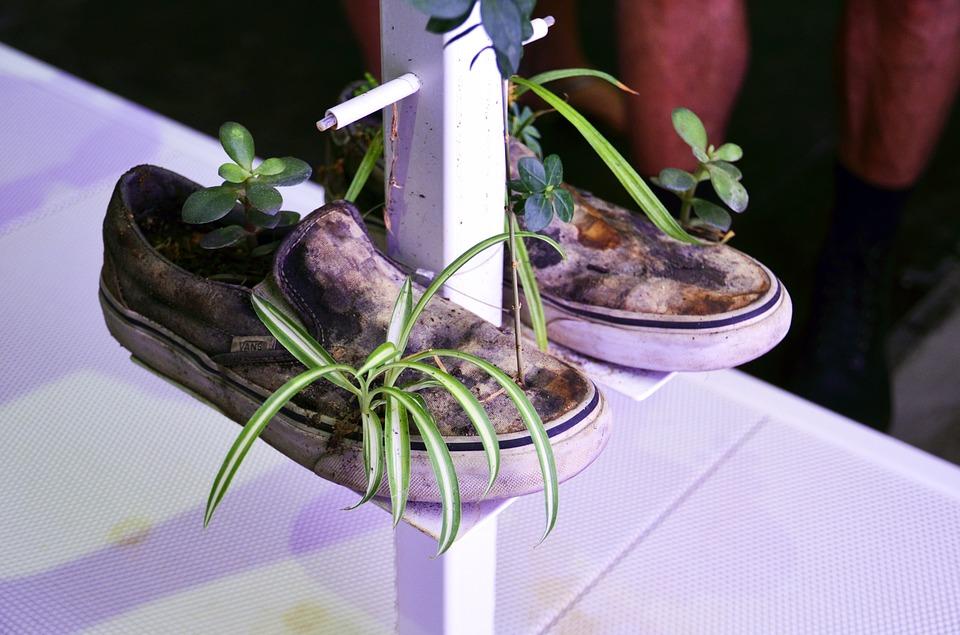 sneakers-2522531_960_720.jpg
