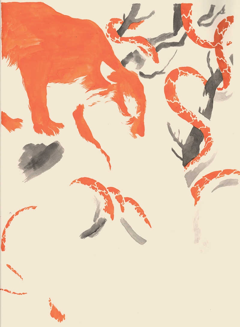 foxing3.jpg