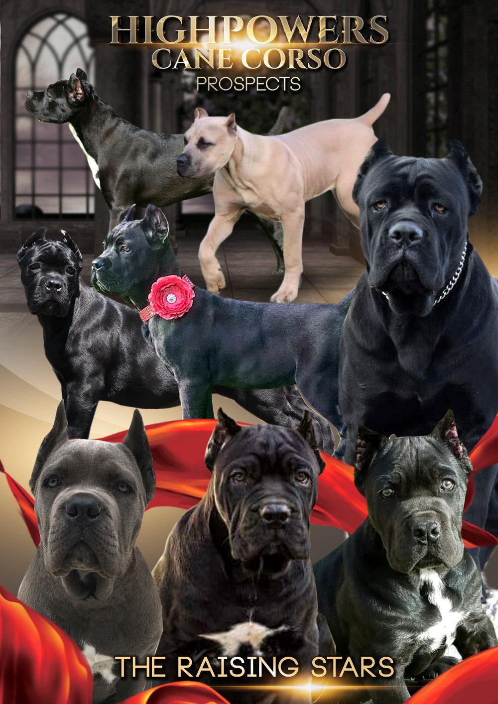 DOGS_2-1.jpg