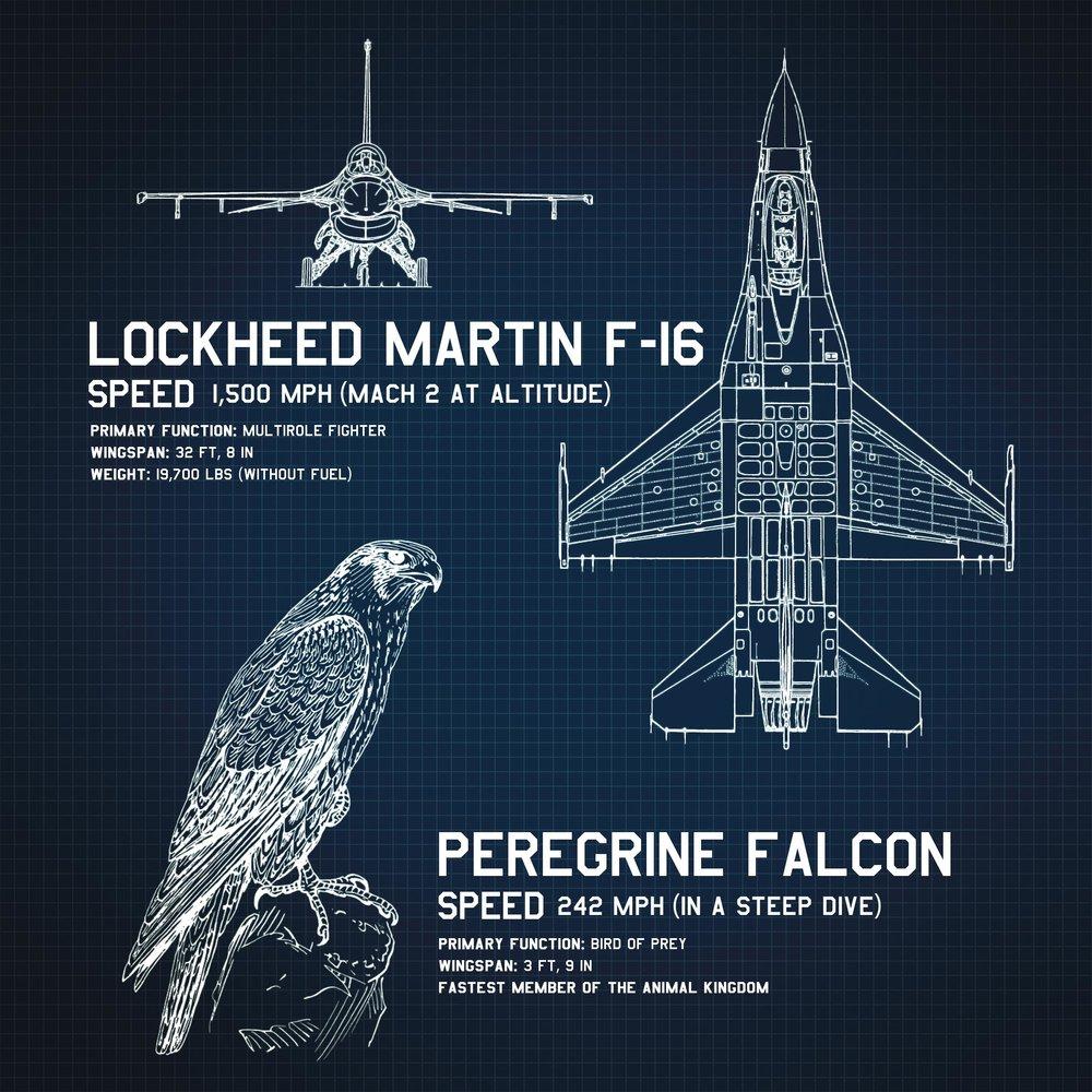 F16_Infographic.jpg