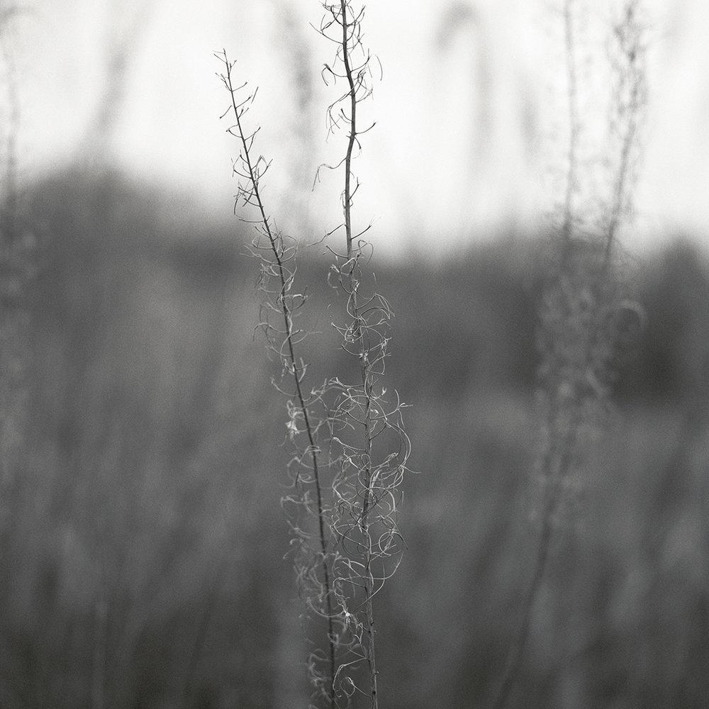 Grass_Study_001_1200px.jpg