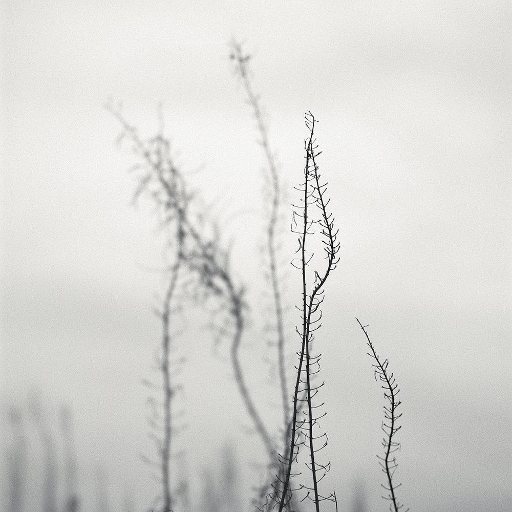 Grass_Study_002_1200px.jpg