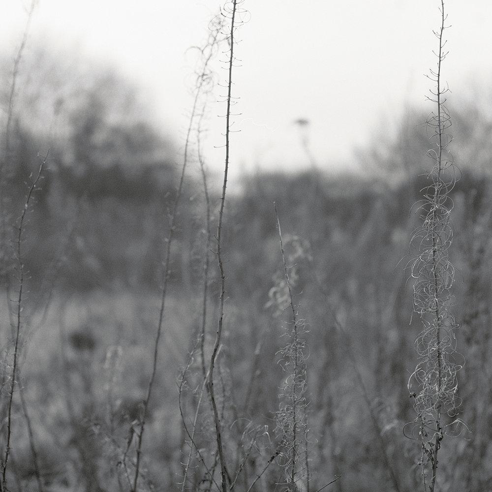 Grass_Study_004_1200px.jpg