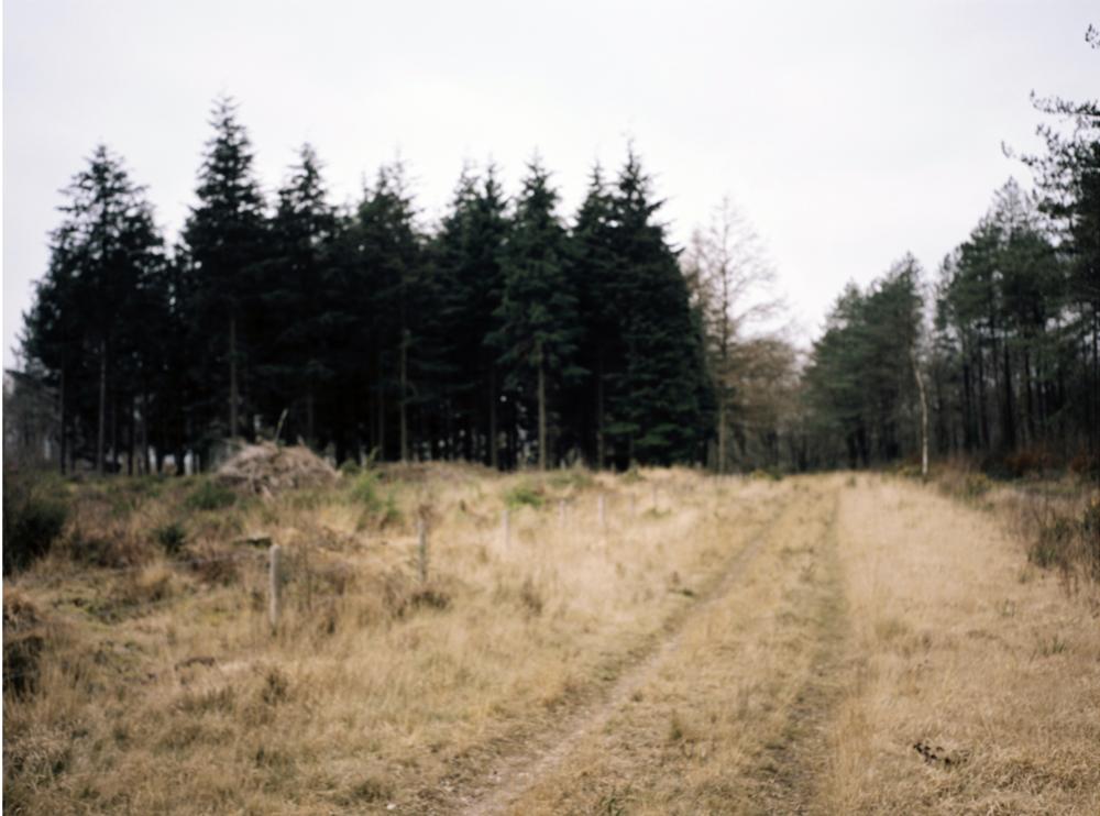 Haldon, Devon. A childhood memory , Anthony Prothero 2016
