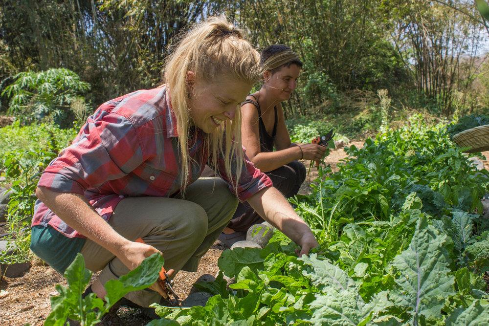 farm DD16.jpg