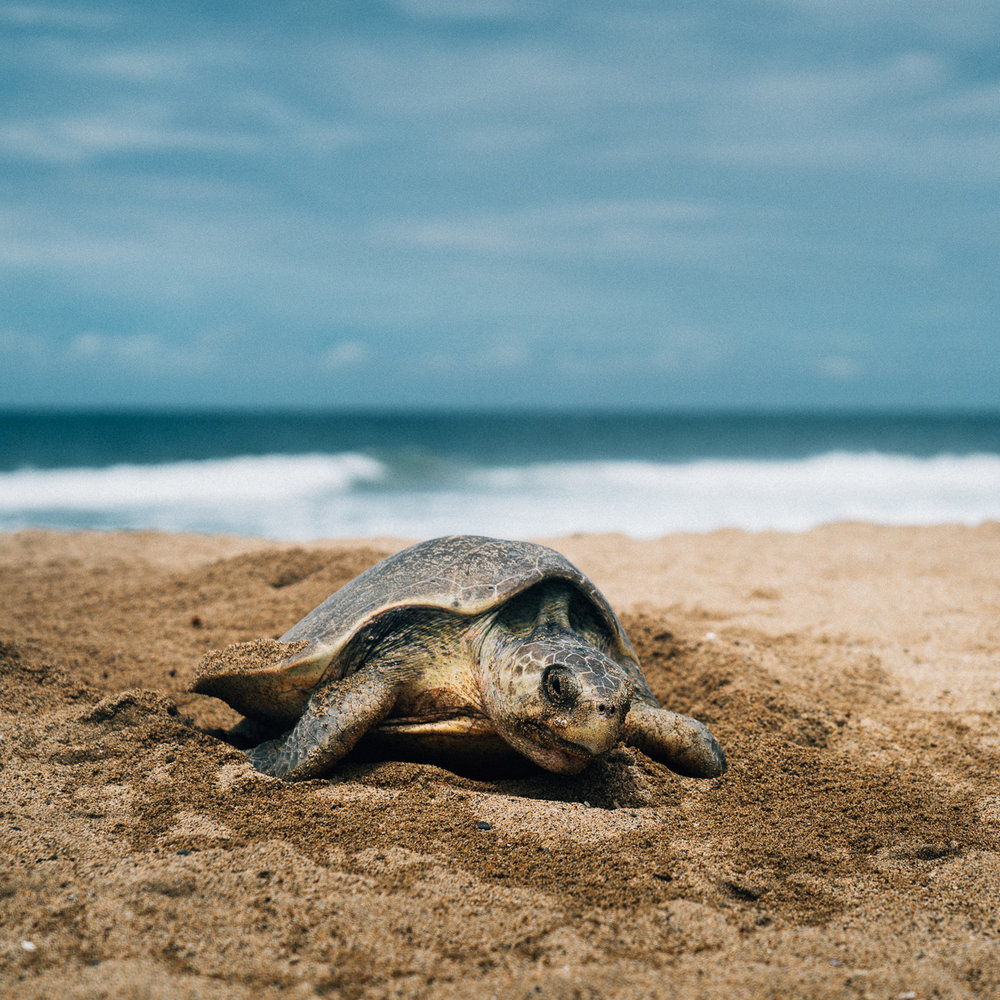 turtlesq.jpg