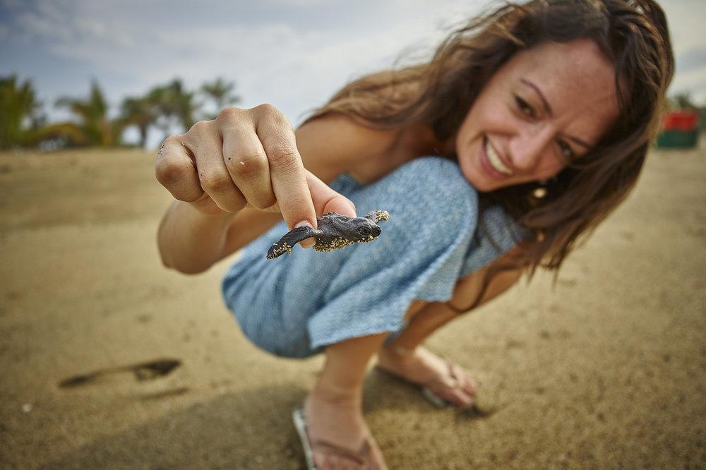 turtleexperience.jpg