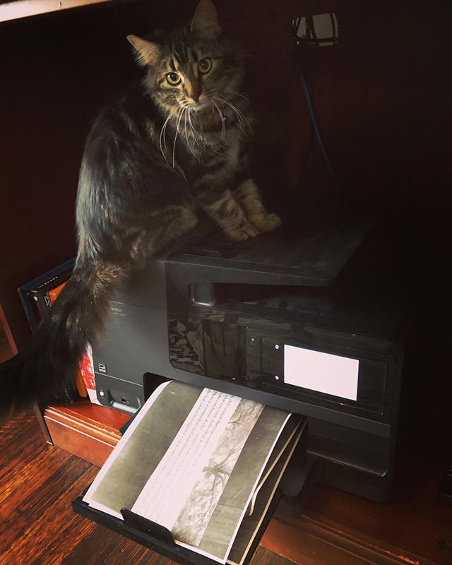 Who needs kitten toys?  Our new member Rosalita seems to believe the printer is a toy.  Love her curiosity - enjoy your curiosity. With love.