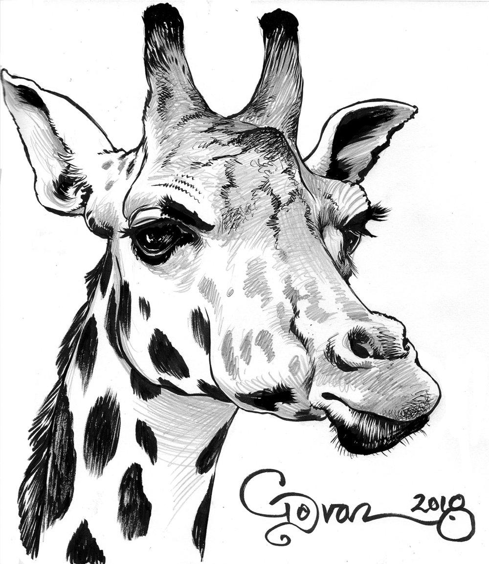 animal_ 90.jpg