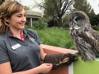 The Lindsay Wildlife Experience - center in Walnut Creek CA celebrated the recently-legislated California Wildlife Day with a series of exhibits and demonstrations. Picture here is an owl handler with a rare owl.