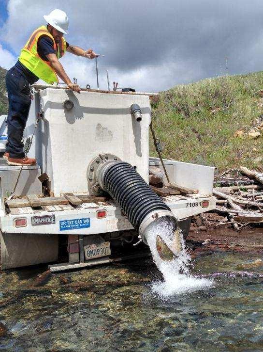Steelhead release behind Los Padres Dam. From: CalAm Water