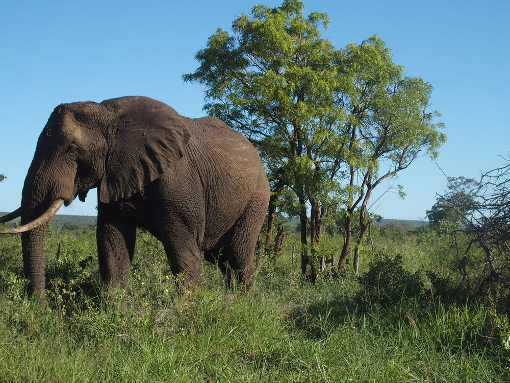Elephants became an unexpectedly common sight, and were the animals we most frequently saw up close from our rental car.