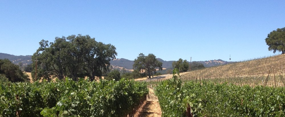 Santa Barbara wine country is the setting for the mid-life crises of the movie  Sideways .