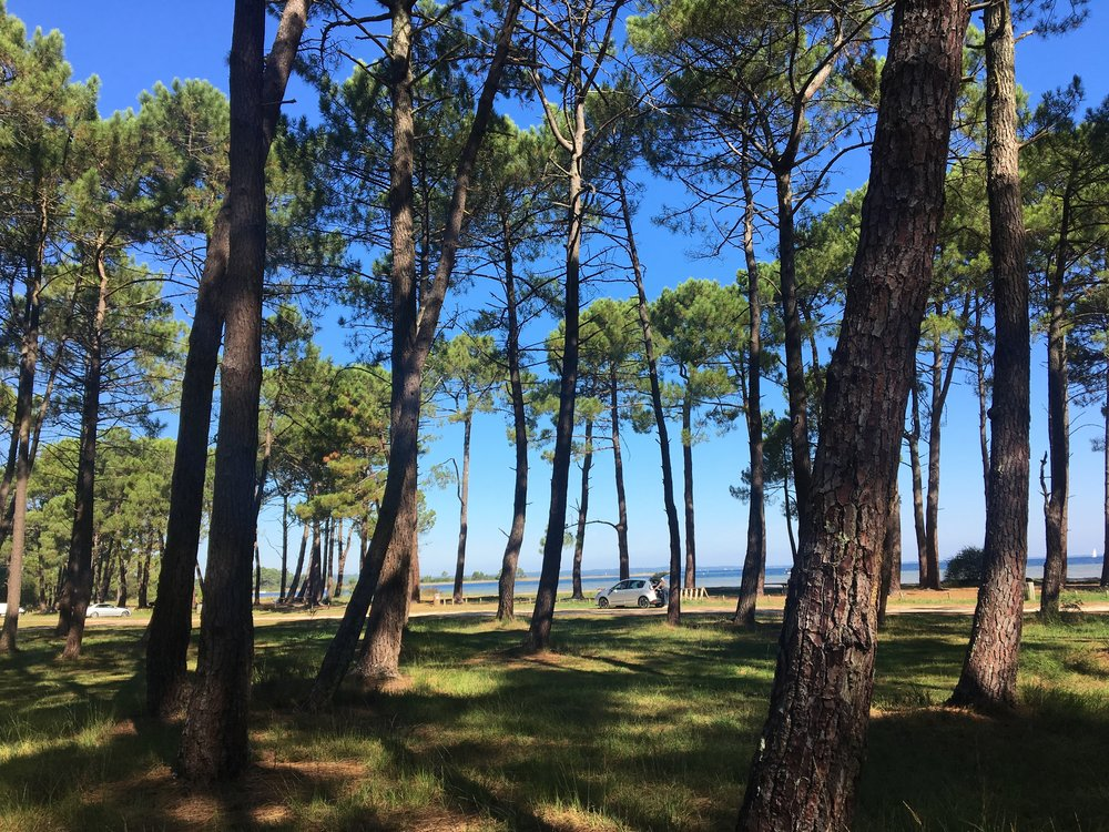 Biking around here is a fascinating view of a truly distinct region, a mix of massive pine forest, sandy beach, lakes and the Atlantic Ocean.