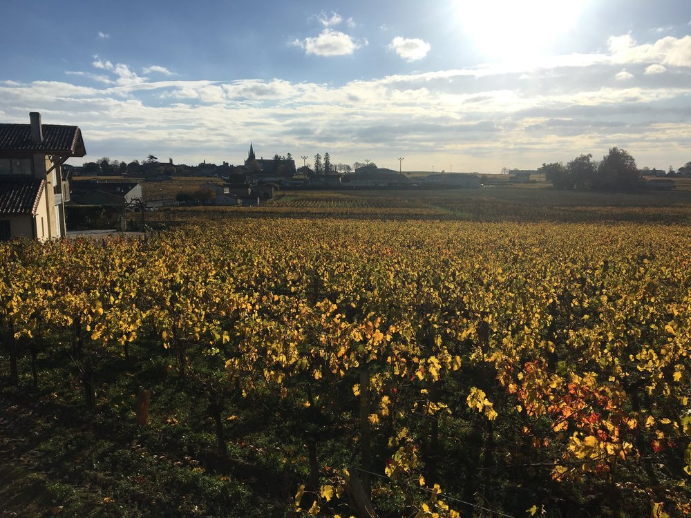 Saint-Émilion vineyards in the fall