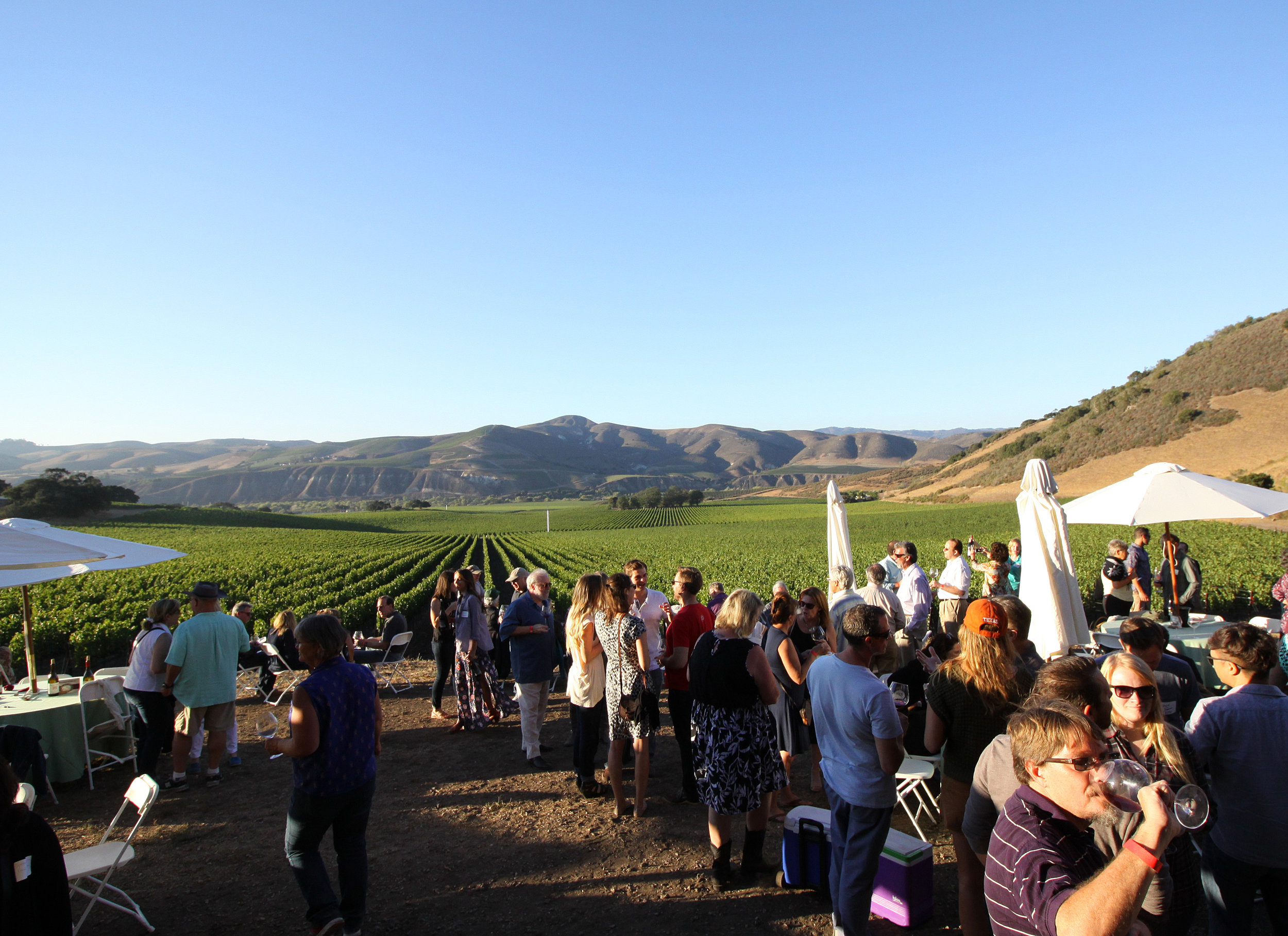 Kimberly Spies Photography/ Guests at the 2014 Wine & Fire Barn Party relish the gorgeous view of the Sta. Rita Hills from the Sanford & Benedict Vineyard historic barn