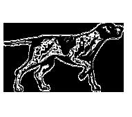 Perro-cierre-olfato-digital-cuadrado.png