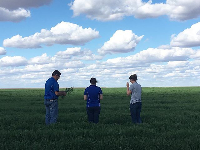 Broadacre team on tour 🌾 #agriculture #aussieag #agronomy #cereal #wintercrop