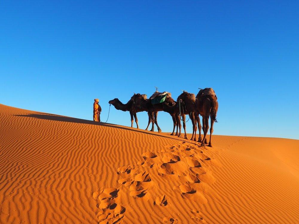The Sahara!