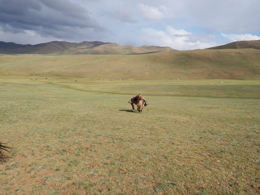 How to pick up trash on the steppe