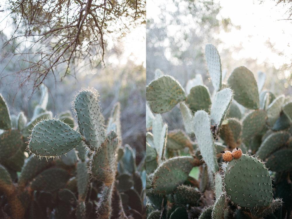 Cacti 2.jpg