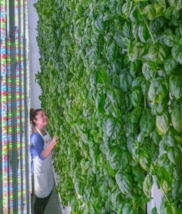 Vertical Farms.jpg