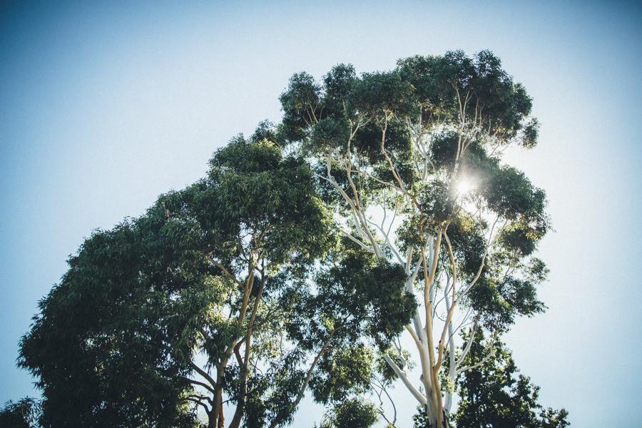 MelbourneWedding-TheFarm-AshleyBlake-237