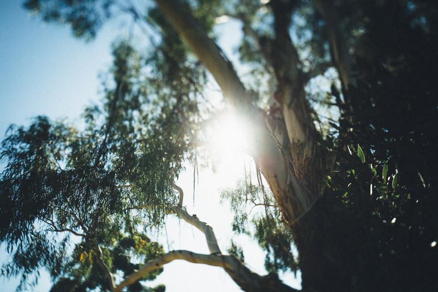 MelbourneWedding-TheFarm-AshleyBlake-240