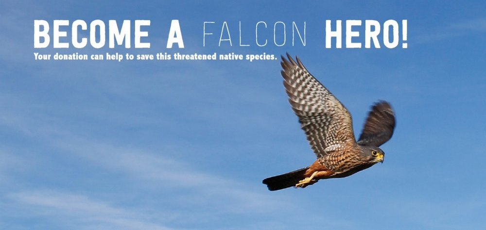 FalconHero.jpg