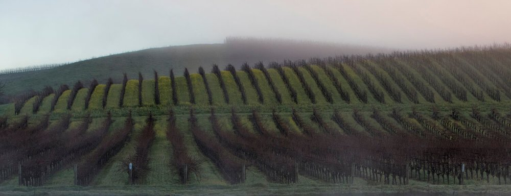 Landscape + Vineyard 3