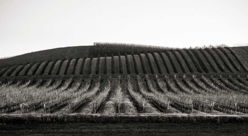 Landscape + Vineyard 13
