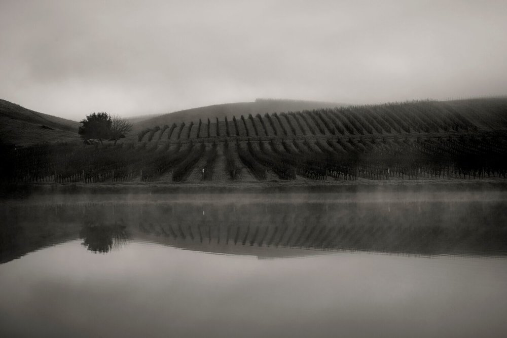 Landscape + Vineyard 6